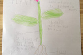 Izzy has drawn and labelled a flower and then explained the job of each part. Fantastic detail Izzy - well done.