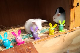 Happy Hoppy Easter Bunny Party by Sophie