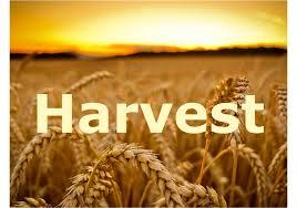 https://files.schudio.com/cathedralprimaryschool/images/CatholicLifeoftheschool/Harvest.jpg