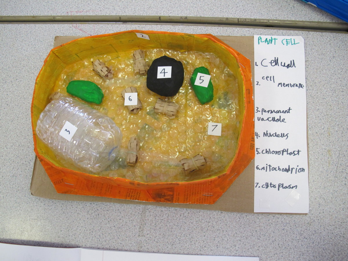 Year 7 Scientists Create 3D Models of Cells | Rye College ...