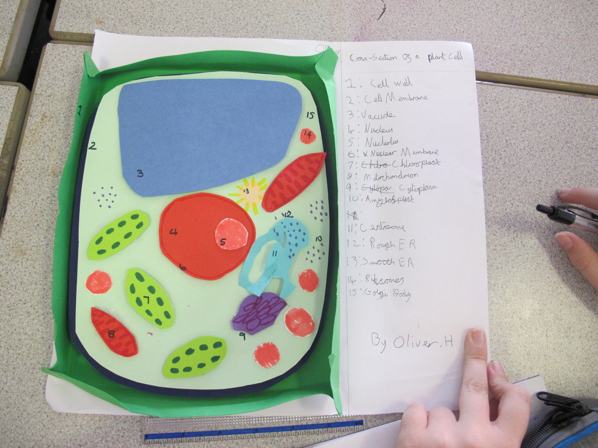 Year 7 Scientists Create 3D Models of Cells   Rye College ...
