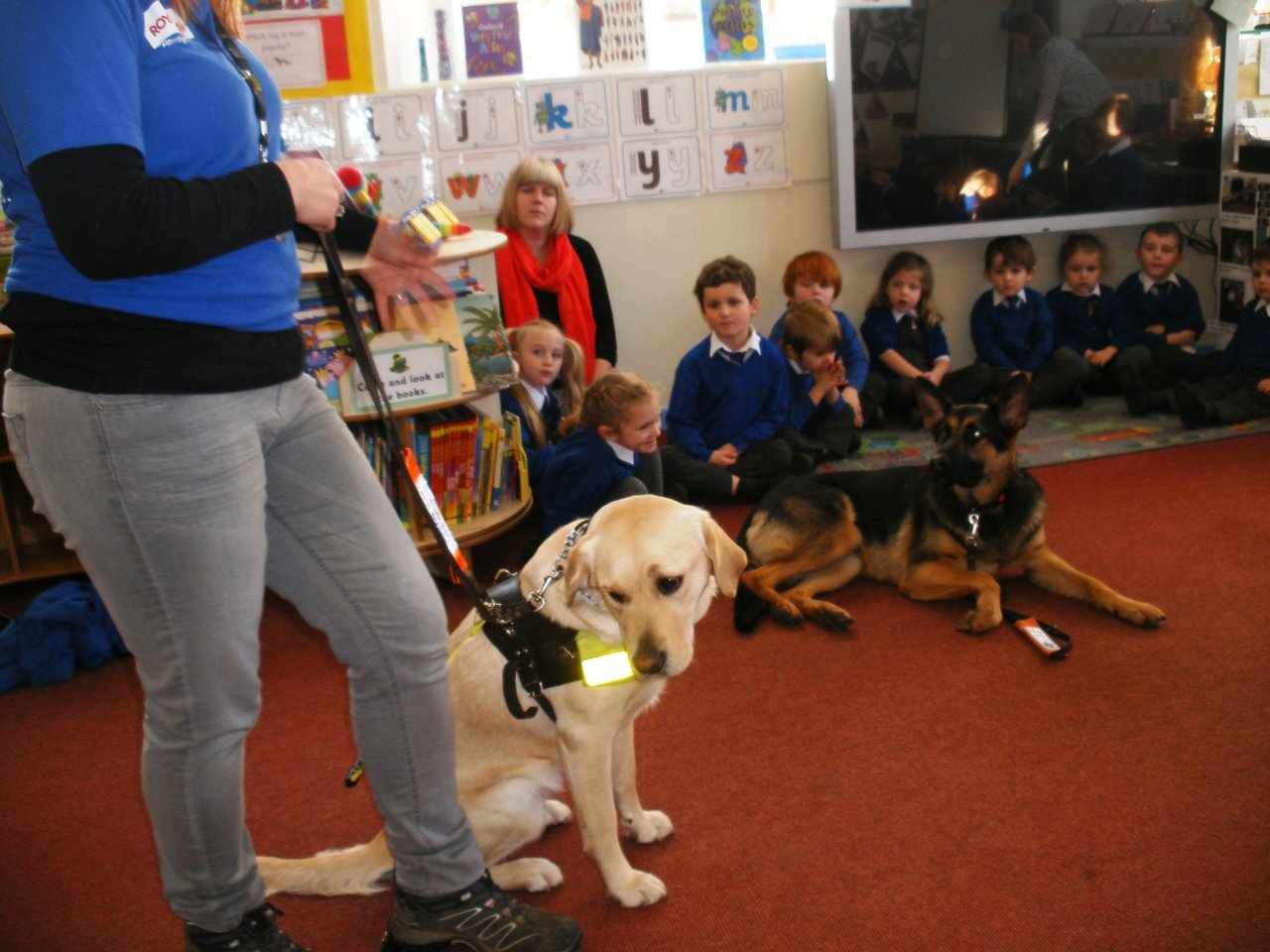 Attacks on guide dogs hit new high, says charity - BBC News