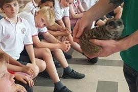 Meerkat visitor during Outdoor Classroom Week - 22/5/2019
